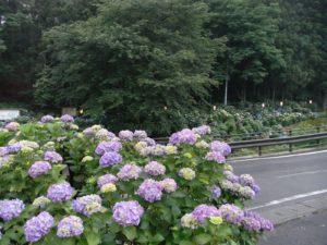 小野寺あじさい公園
